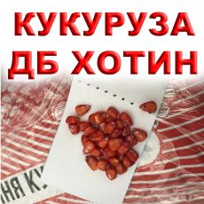 Хотин гибрнид кукурузы ФАО 250