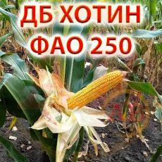 avhotynddb250