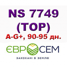 НС 7749 ( ТОР ) - семена подсолнечни ка A-G+