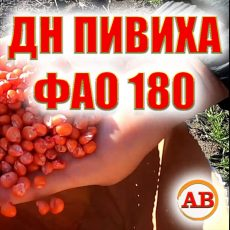 Гибрид кукурузы ДН ПИВИХА ФАО 180