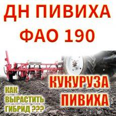 Гибрид кукурузы ДН ПИВИХА ФАО 190