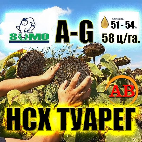НС Х ТУАРЕГ - ПОДСОЛНЕЧНИК СУМО и A - G+